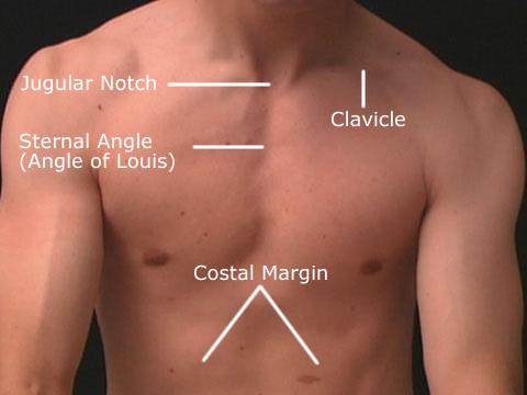 jugular notch.jpeg