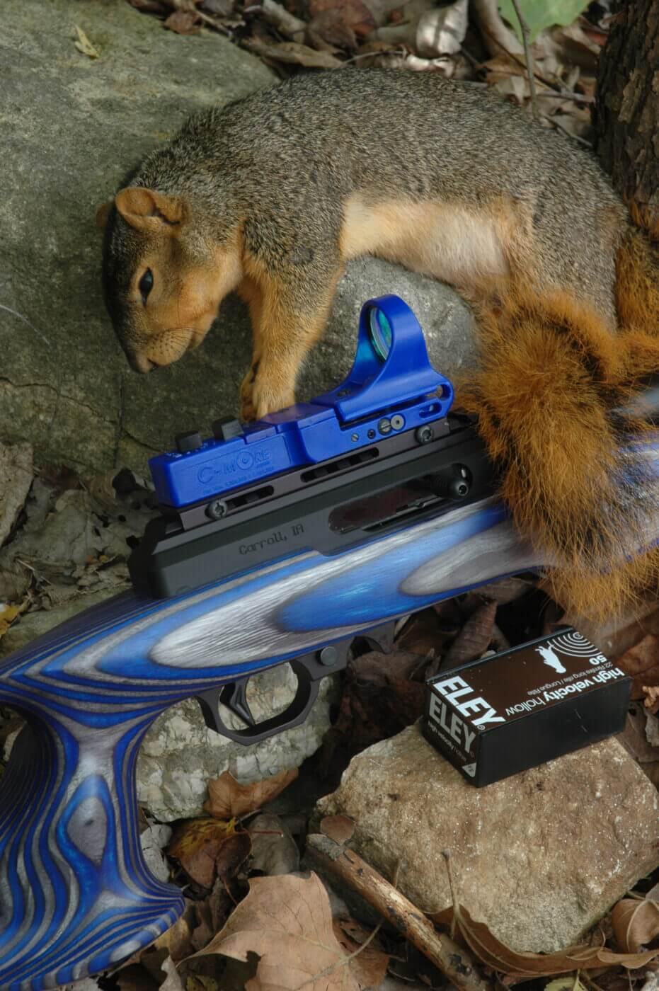C-More sight used to hunt squirrel