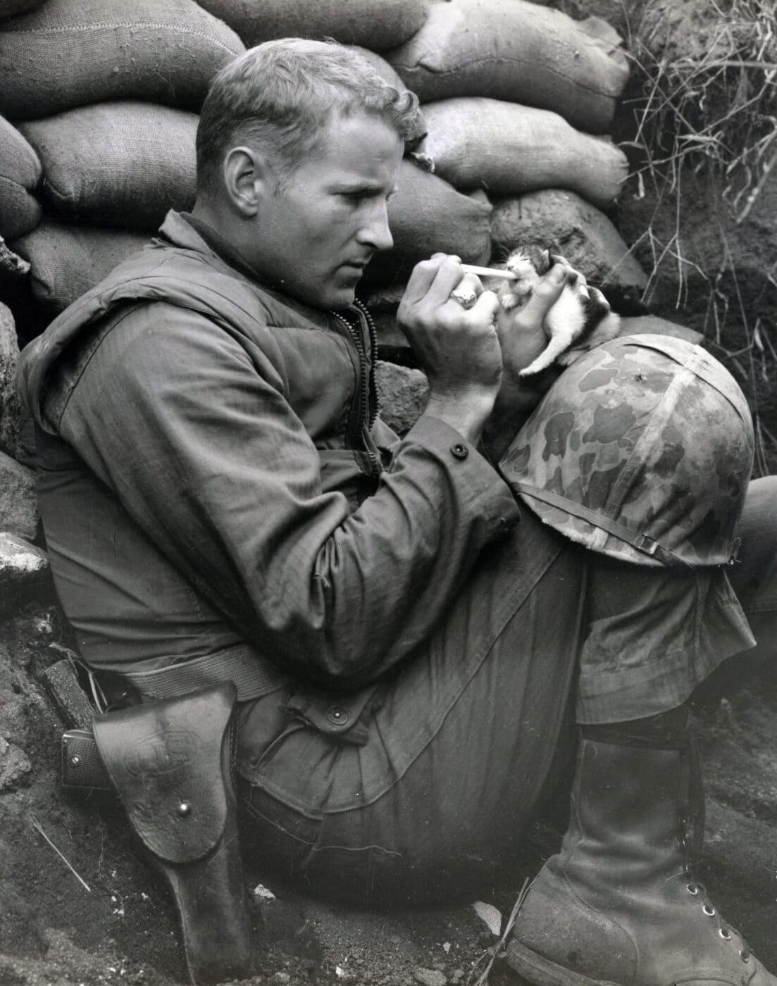 Kitten being fed by U.S. Marine in the Korean War